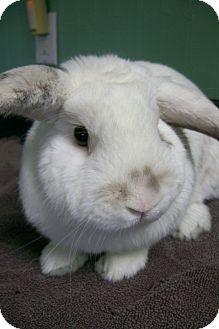 Lop-Eared Mix for adoption in Harrisburg, Pennsylvania - Mr. Bun Buns