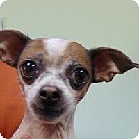 Adopt A Pet :: Star - Loveland, CO