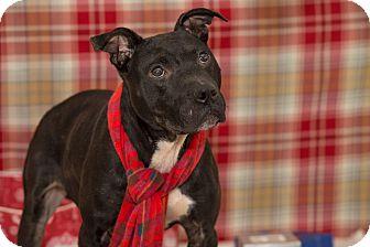 Terrier (Unknown Type, Medium) Mix Dog for adoption in Flint, Michigan - Oliver