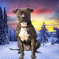 Adopt A Pet :: JAXON - Fairfield, CA