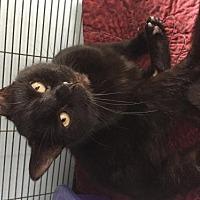 Adopt A Pet :: Dorona - Grand Ledge, MI