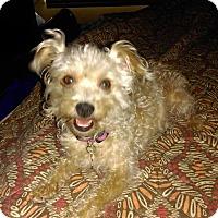 Adopt A Pet :: Bailey - San Diego, CA