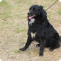 Adopt A Pet :: Bear - Erwin, TN
