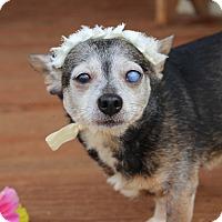 Adopt A Pet :: Miabella - Fort Valley, GA