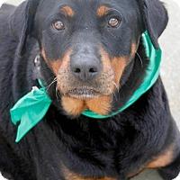 Adopt A Pet :: Kiaya - Washington, DC