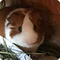 Adopt A Pet :: *Urgent* Truman - Fullerton, CA