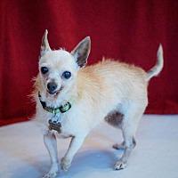 Adopt A Pet :: Bunny - Bealeton, VA