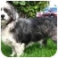 Photo 2 - Terrier (Unknown Type, Small) Mix Dog for adoption in Spring Valley, California - Brody
