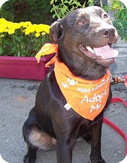 Labrador Retriever Mix Dog for adoption in Grants Pass, Oregon - Beano