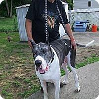 Adopt A Pet :: Moose - West Bloomfield, MI