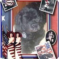 Adopt A Pet :: Maddie - Mays Landing, NJ