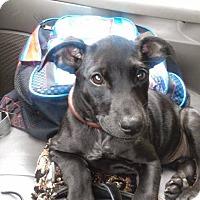 Adopt A Pet :: Dixie - Dayton, OH