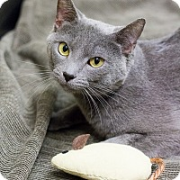 Adopt A Pet :: Lazlo - Chicago, IL