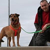 Adopt A Pet :: Jaxson - Lawrenceville, GA
