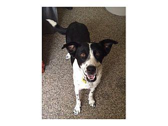 Border Collie Mix Dog for adoption in Tempe, Arizona - Millie
