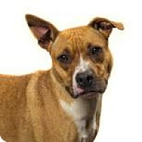 Adopt A Pet :: Glory 6514 - Columbus, GA