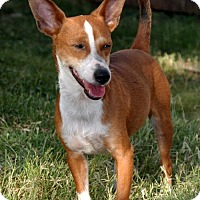 Adopt A Pet :: Spencer - Pipe Creed, TX