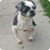 Adopt A Pet :: Winstead Stanley - Mission, KS