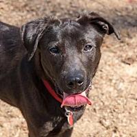 Adopt A Pet :: CHIPPER - Blairsville, GA