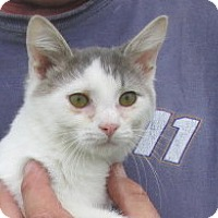 Adopt A Pet :: Boss - Germantown, MD