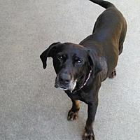 Adopt A Pet :: Sadie - Carmichael, CA