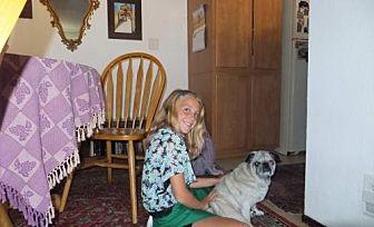 Pug Dog for adoption in Dana Point, California - Lexus