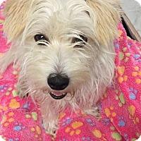 Adopt A Pet :: Shelly - Brea, CA