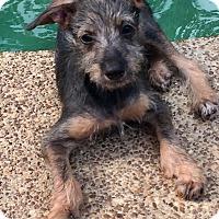 Adopt A Pet :: CLIF - Fishkill, NY