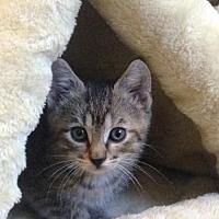 Adopt A Pet :: Loretta - Whitewater, WI