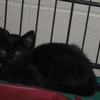 Adopt A Pet :: Alpha - Russellville, KY