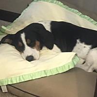 Adopt A Pet :: Rizzo - Northport, AL
