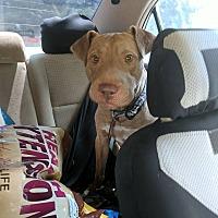 Adopt A Pet :: Snoopy - Covington, TN