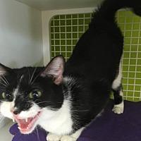 Adopt A Pet :: Karla - Columbus, OH