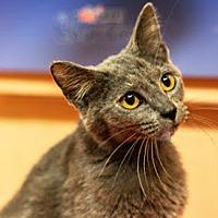 Adopt A Pet :: Mystique17 - Youngsville, NC