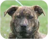 Plott Hound Mix Puppy for adoption in Marion, Arkansas - Molly