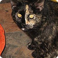 Adopt A Pet :: Tinkerbell - Sherman Oaks, CA