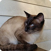 Adopt A Pet :: Rooney - Bentonville, AR