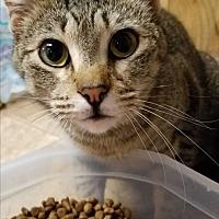 Adopt A Pet :: Brigot's Sugar - Yukon, OK