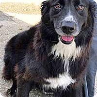Adopt A Pet :: Ellie - BIRMINGHAM, AL