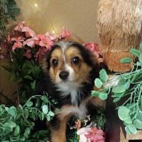 Adopt A Pet :: beast - Sacramento, CA