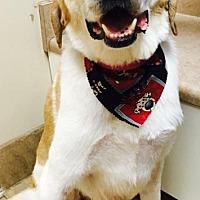 Adopt A Pet :: Phoenix - Christiana, TN