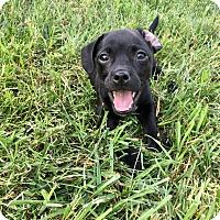 Adopt A Pet :: Macaroon