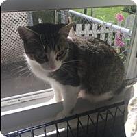 Adopt A Pet :: Miss Owl - Warren, MI