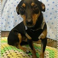 Adopt A Pet :: Dude - Cherry Valley, CA