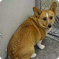 Adopt A Pet :: Gulliver - Sudbury, MA