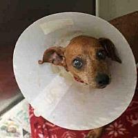 Adopt A Pet :: A1723478 - Los Angeles, CA