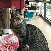 Adopt A Pet :: Ahina - Oxnard, CA