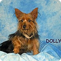 Adopt A Pet :: Dolly - Ft. Myers, FL
