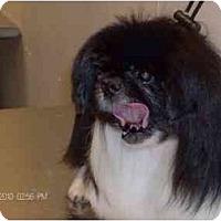 Adopt A Pet :: Skeeter-PA - Emmaus, PA