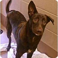 Adopt A Pet :: Durango - Plano, TX